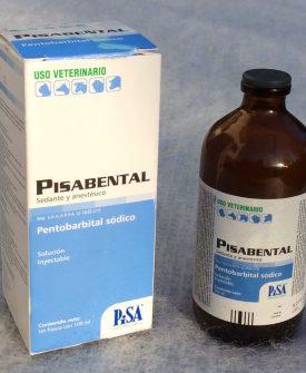 buy nembutal pentobarbital